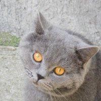 Любопытный кот :: Дарья Fox