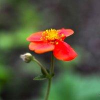 Цветок :: Alex Bezvetrenniy