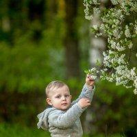 Цветущая весна :: Вера N