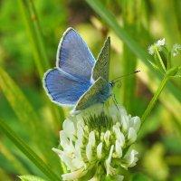 Голубое очарование :: Swetlana V