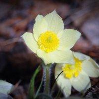 цветы :: kamo-kam kam