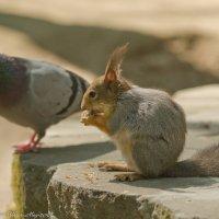 Что у тебя там за орешки? :: Виктор Евстратов