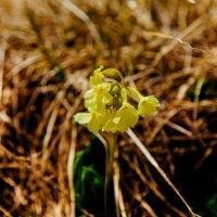 Горные цветочки !!!! :: Кристина Беляева
