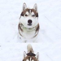 Макс_1 :: Елена