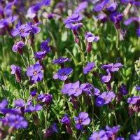 Полевые цветы :: Paparazzi
