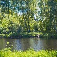 Зелёное царство :: Виталий