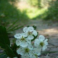 Цветы на тропе :: Юля Кулёк