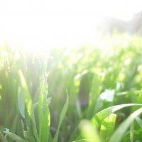 Утренняя трава :: Юля Кулёк