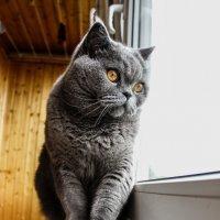My cat. :: Victoria Efanova