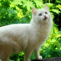 Моя кошка. :: Алина Якушина