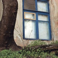 window :: Anastasia GangLiON