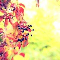 Осень весной :: Дашка Стеценко