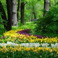 Цветочная поляна. :: Ольга