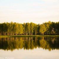 Лес в отражении :: Дмитрий Малышев