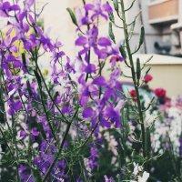 Цветы :: Mary North