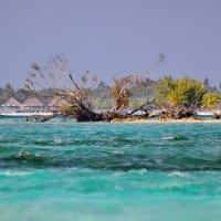 Мальдивские о-ва... :: Александр Вивчарик