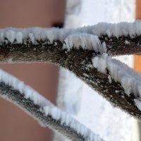 снежное дерево :: Виктор Пушкин