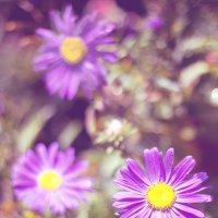цветы :: Людмила Юнченко
