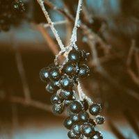Зима :: Андрей Канивец