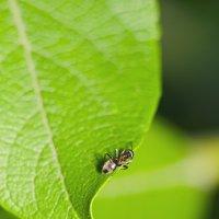 ant :: Николай Дегтярев