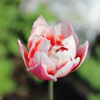 цветок :: Юлия Середа