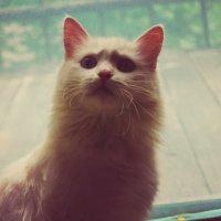 My cat :: Алина Якушина