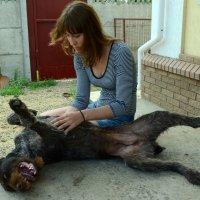 О моя великая собака-модель! :: Вероника Томилова