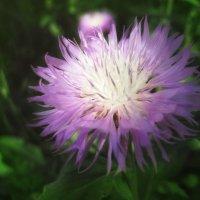 Лучик и цветок :: Тамрико Дат