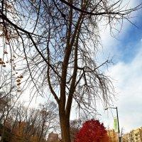 Осень в Центральном Парке :: Anvar Sabirov
