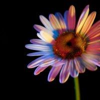 Цветик-семицветик :: Александр Гизун