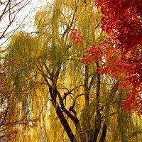 Золотая осень :: Anvar Sabirov