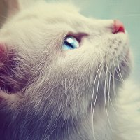 My cat. :: Алина Якушина