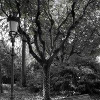 Старое дерево в Королевском парке :: Елена M