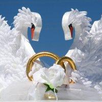 Лебеди.... :: игорь козельцев