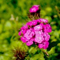 Цветок. :: Николай Сидаш