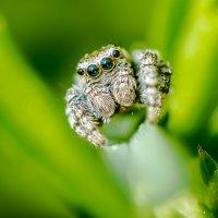 Кто сказал что пауки страшные? :: Соня Орешковая (Евгения Муравская)