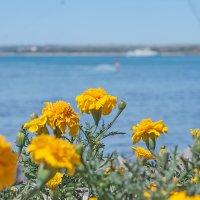 На фоне моря... :: Елена Васильева