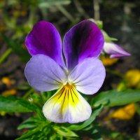 Цветок :: Oleg Tumakov