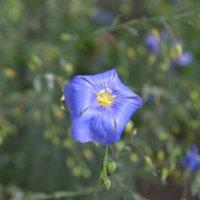 Неизвестный цветочек) :: Никита Трофимов