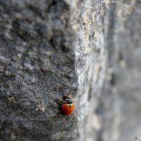 Альпинистка моя, скалолазка моя. :: Любовь Шихова