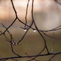 капли дождя :: klevyanyk Клевъяник