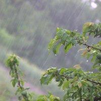 Июньский дождь :: Инесса V