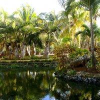райский уголок, о.Куба :: Юлия Ляшенко