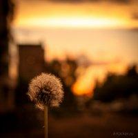 В лучах заката :: Aleksandr Kachan