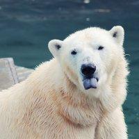 Медведь :: Лиза Боцман