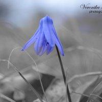 Приход весны... :: Вероника Томилова