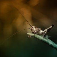 Grasshopper :: regular worm