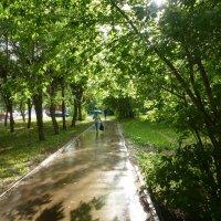 дождь :: Алексей Логинов
