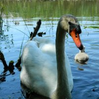 Гуси-лебеди :: Lina Liber