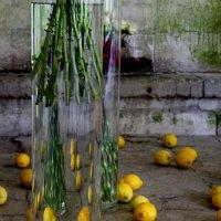 Оптические лимоны :: Татьяна Кирюшкина